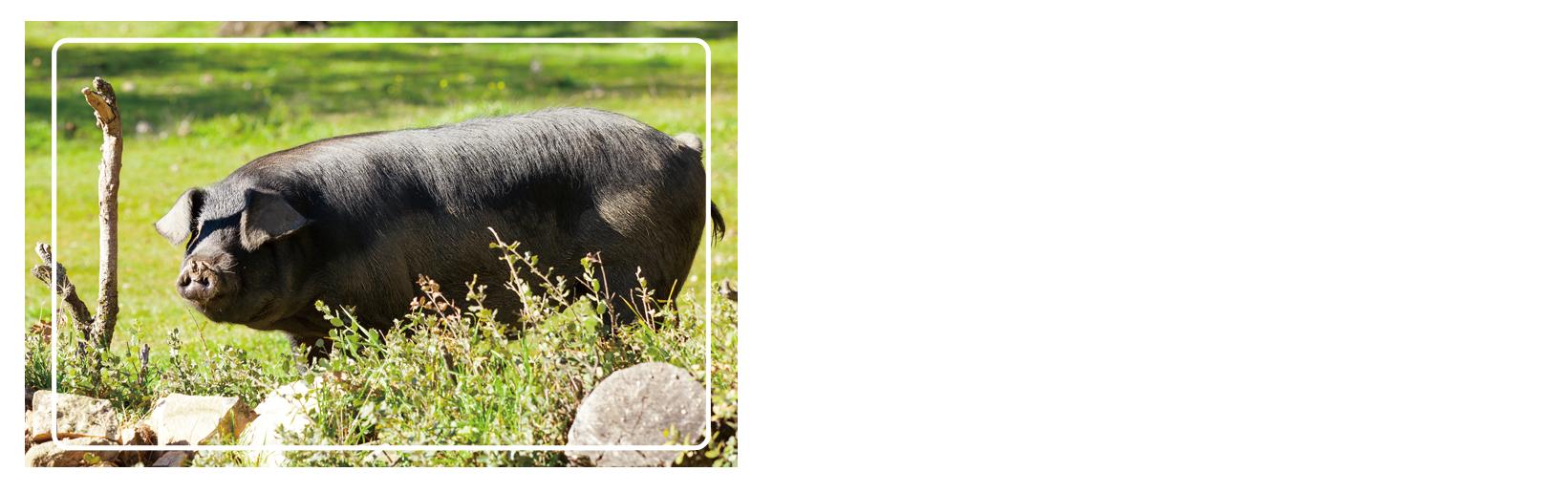 gyu1kodawari01